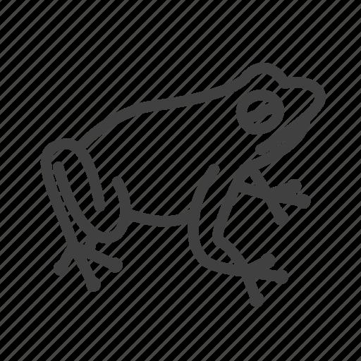 Frog, animal, amphibian, toad, wildlife, nature, pet icon - Download on Iconfinder