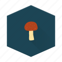 boards, forest, grow, individular, mushroom, plant icon
