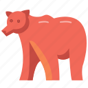 animal, animals, bear, mammal, wild, wildlife icon