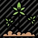 cannabis, drug, grow, herbal, marijuana icon
