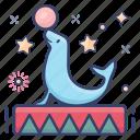 carnival, circus dolphin, circus feats, circus walrus, dolphin feats