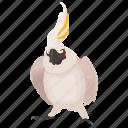 cocktail parrot, feather creature, parakeet, white parrot, wild bird icon
