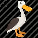 duck, land duck, bird, farm duck, pet animal
