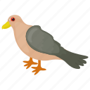 feather creature, fowl, humming pigeon, pigeon, rock pigeon icon