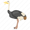animal, feather creature, flightless bird, giant, ostrich icon
