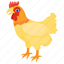 bird, chicken, domestic animal, domesticated fowl, hen icon