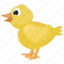 baby chicken, chick, farm animal, feather creature, rooster