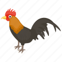 chicken, cock, feather creature, pet animal, rooster icon