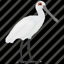 beach bird, bird, feather creature, herons, white herons icon