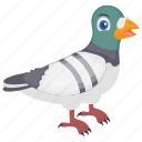 cartoon pigeon, feather creature, fowl, humming pigeon, rock pigeon icon