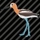 crane, japanese crane, whooping crane, sandhill crane