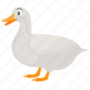 bird, duck, farm duck, land duck, pet animal icon