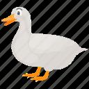 bird, duck, farm duck, land duck, pet animal