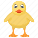 baby chicken, chick, farm animal, feather creature, rooster icon