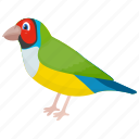 bird, feather creature, macaw, parrot, pet bird