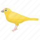 australian plainhead, canary, chickadee, domestic canary, songbird icon