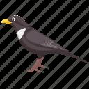 bird, black bird, egyptian plover, feather creature, fowl icon