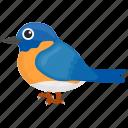 blue bird, blue sparrow, canadian sparrow, feather creature, indigo bunting icon