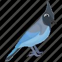 blue jay, feather creature, fowl, mockingbird, pet animal icon