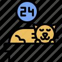 cat, sleep, kitten, domestic, kitty, pet, animal