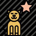 favorite, star, pussycat, kitty, kitten, cat, pet