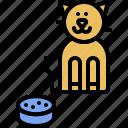 food, kitten, domestic, kitty, cat, pet, animal