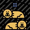house, kitten, domestic, kitty, cat, pet, animal