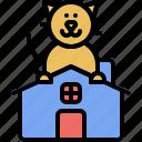 house, kitten, domestic, kitty, cat, pet, home