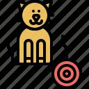 playing, pussycat, kitty, kitten, domestic, cat, pet