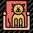 sofa, pussycat, kitty, kitten, domestic, cat, pet