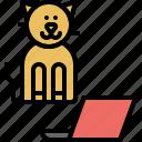 work, pussycat, kitty, kitten, domestic, cat, pet