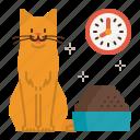 cat, care, food, feed, feeding, time