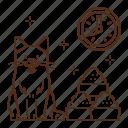 cat, care, food, feed, feeding, kitten, time