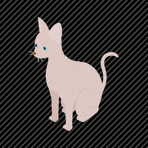 animal, blog, cat, isometric, kitten, pet, sphinx icon