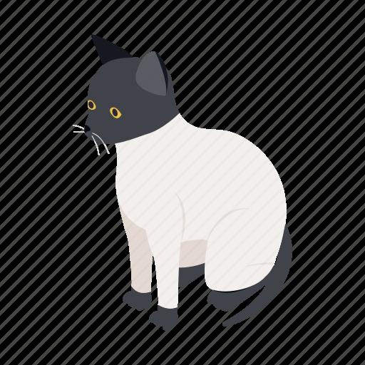animal, blog, cat, isometric, kitten, pet, ragdoll icon