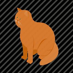 animal, big, blog, cat, isometric, orange, pet icon