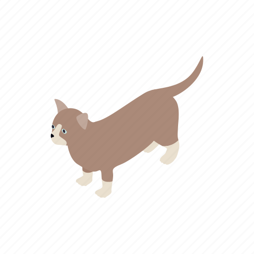 animal, blog, cat, isometric, kitten, munchkin, pet icon