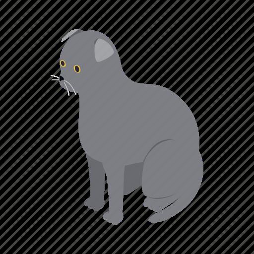 animal, blog, cat, fold, isometric, pet, scottish icon