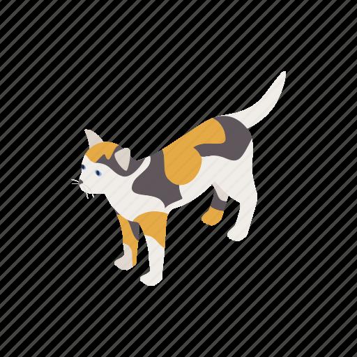 animal, blog, cat, isometric, kitten, pet, tortoiseshell icon