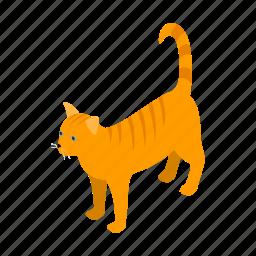 animal, blog, cat, isometric, orange, pet, tabby icon