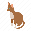 animal, blog, cat, cornish, isometric, pet, rex icon