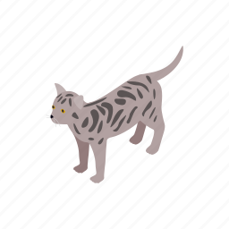 animal, bengal, blog, cat, isometric, kitten, pet icon