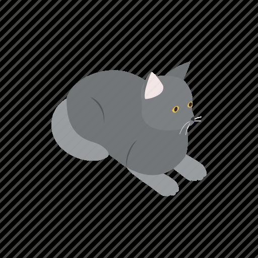 animal, blog, cat, grey, isometric, kitten, pet icon