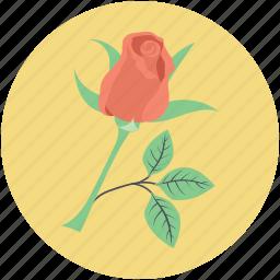 blossom, flower, love symbol, red rose, rose, rosebud icon