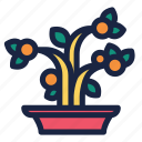 celebration, chinese, chinese new year, decoration, holiday, kumquat, kumquat tree icon
