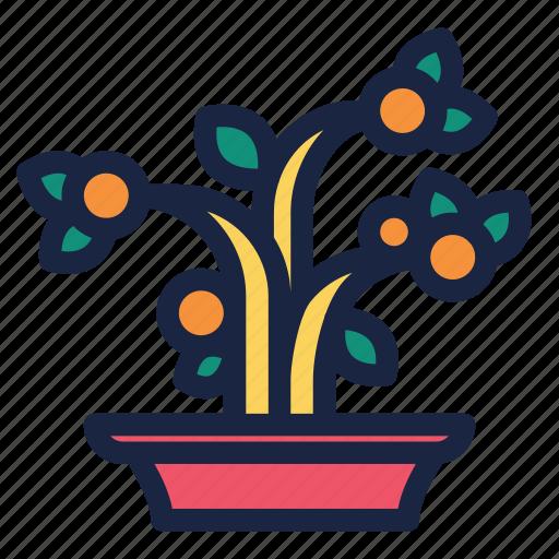 celebration, chinese, chinese new year, decoration, holiday, kumquat, kumquat tree icon