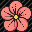 chinese, flower, plum icon