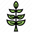 herb, olive, organic, peace, plant icon