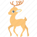 animal, deer, elk, reindeer, rudolf