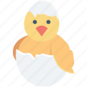 bird, broken egg, chick, chicken, easter icon